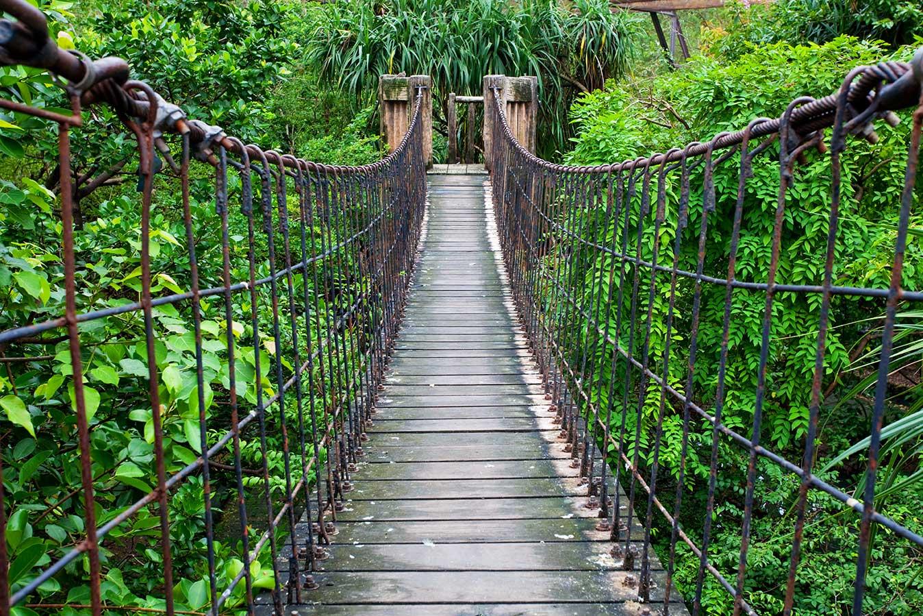 Fotobehang Hangbrug Jungle De Fabriek Muurstickers